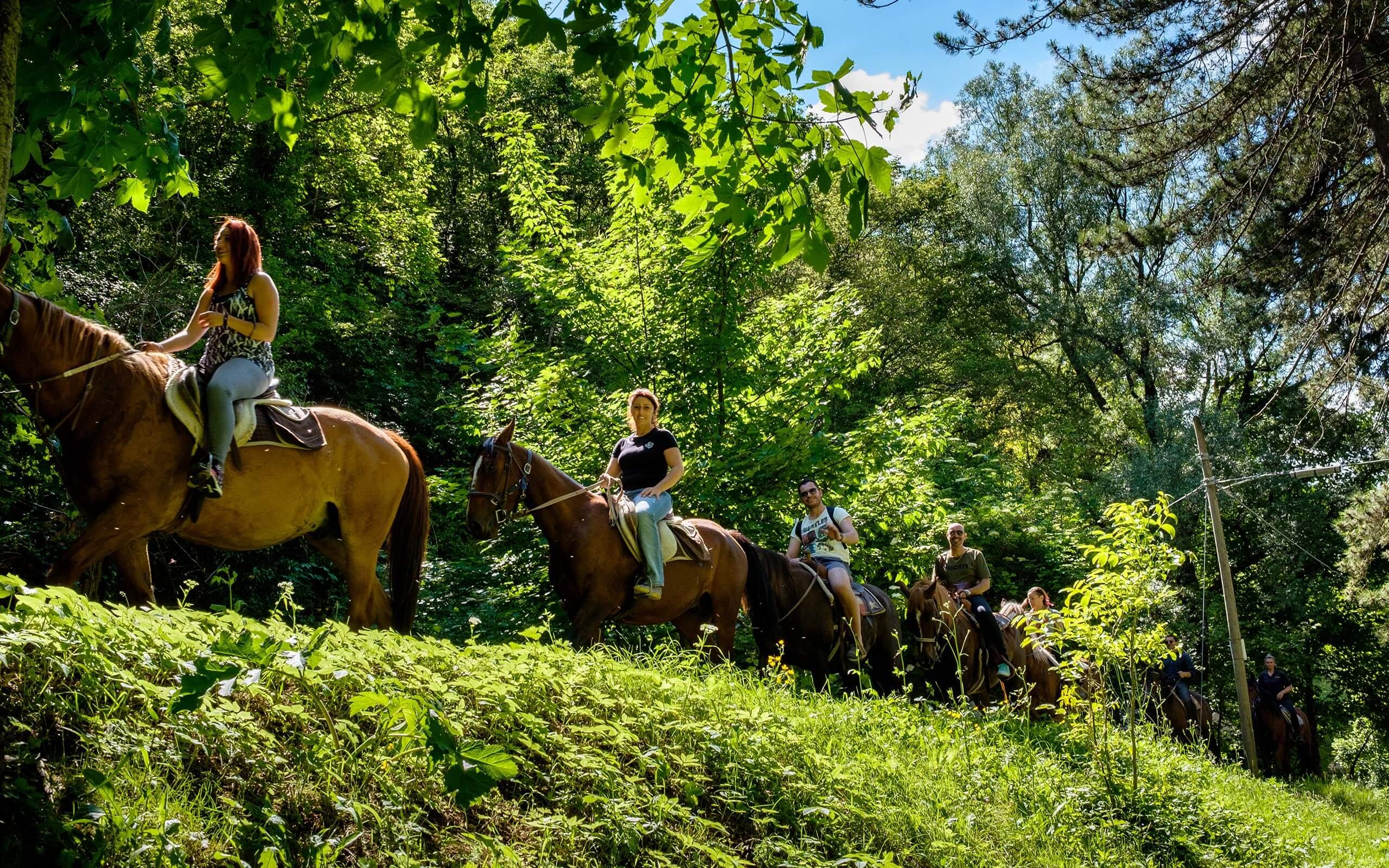 cavallo-boschi